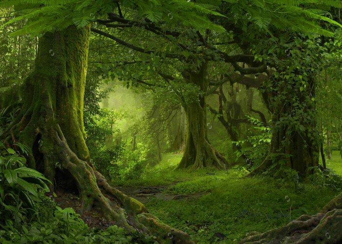 Jungle-Safari-Tree-Forest-photo-backdrop-Vinyl-cloth-High-quality-Computer-printed-party-photo-studio-background.jpg